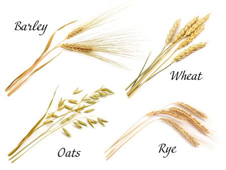 cebada: Cereales conjunto aislado sobre fondo blanco. Avena, centeno, trigo, cebada.