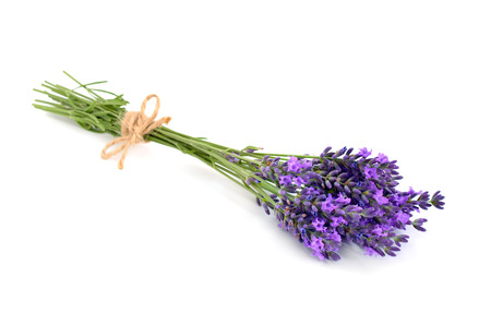 Lavender bunch with a jute rope. Isolated on white background.