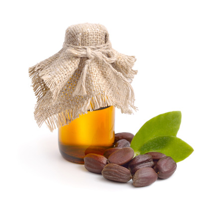 perfume oil: Jojoba (Simmondsia chinensis) leaves, seeds with oil. Isolated on withe beckground.
