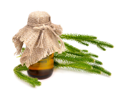 vedic: Huperzia selago (Lycopodium selago), northern firmoss or fir clubmoss with pharmaceutical bottle. Isolated. Stock Photo