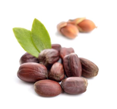 huile: Jojoba (Simmondsia chinensis) laisse avec des graines. Isolé sur withe beckground.