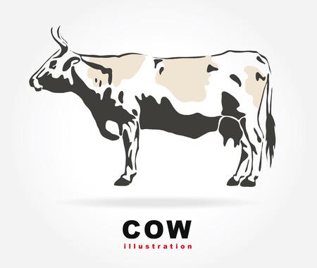 illustraion: Cow. Vector illustraion.
