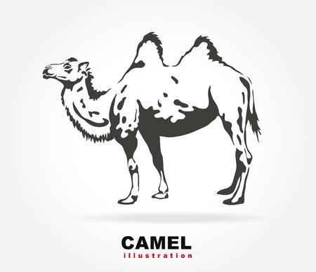 illustraion: Bactrian camel. Vector illustraion.