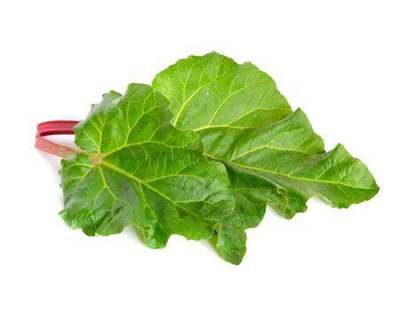 rheum: Rheum plant. Isolated on white. Stock Photo