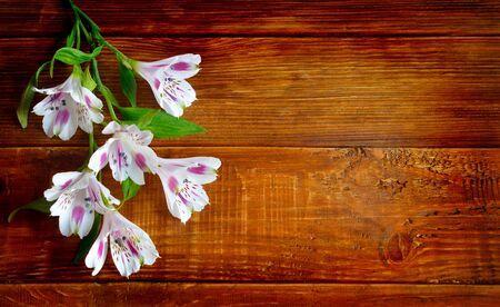 Alstromeria flowers on the wooden board background.