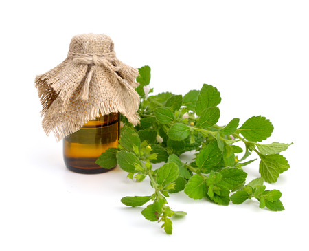 balm: Melissa officinalis, known as lemon balm, balm, common balm, or balm mint Stock Photo