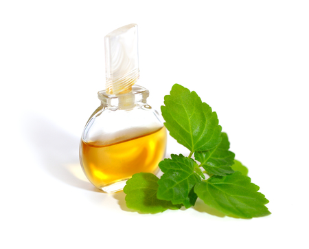 Patchouli sprig with essential oil. Isolated on white background. Foto de archivo
