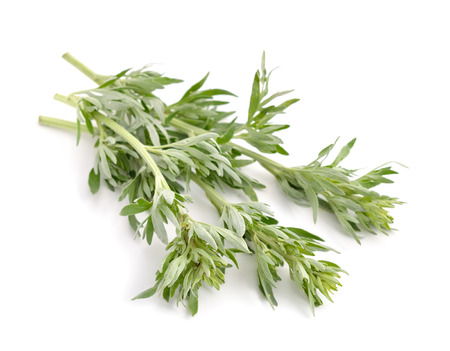sagebrush: Artemisia, mugwort, wormwood, and sagebrush. Isolated. Stock Photo
