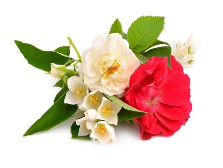 Rose with jasmine isolated on white background.