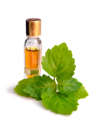 Patchouli sprig with essential oil. Isolated on white background. Standard-Bild
