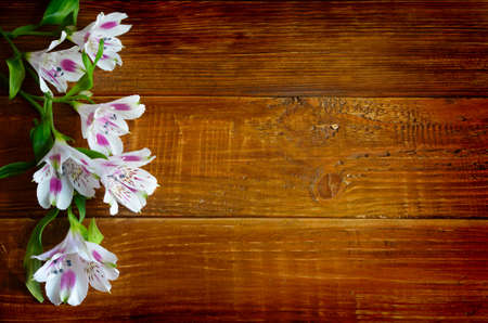 lily flowers: Alstromeria flowers on the wooden board background.