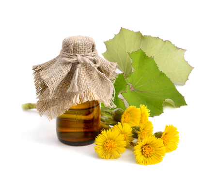 pharmaceutical bottle: Coltsfoot flowers with pharmaceutical bottle. Isolated.