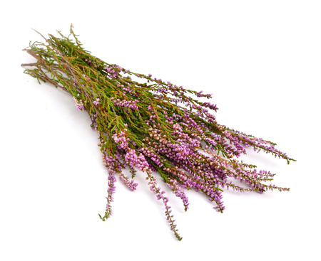 heather: Calluna vulgaris (known as common heather, ling, or simply heather) isolated.