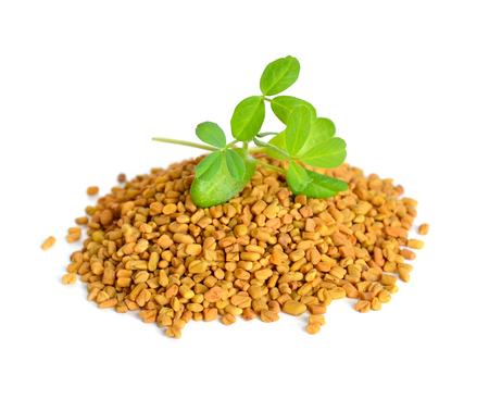 legumbres secas: semillas de fenogreco con el brote. (Trigonella foenum-graecum)