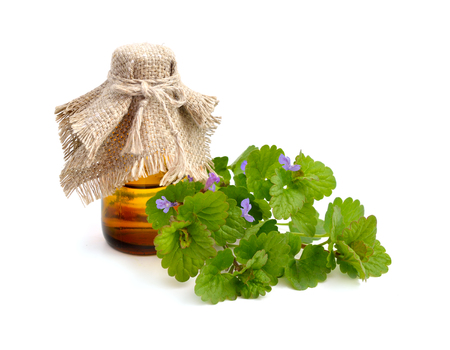 pharmaceutical bottle: Glechoma hederacea, ground-ivy, gill-over-the-ground, creeping charlie, alehoof, tunhoof, catsfoot, field balm, run-away-robin. With pharmaceutical bottle. Isolated.
