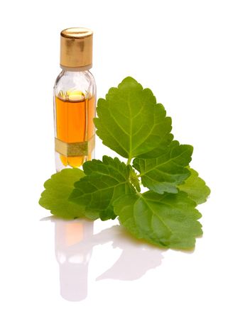 Patchouli sprig with essential oil. Isolated with reflection on white background.