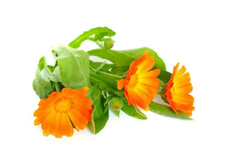 garden marigold: Calendula officinalis (pot marigold, ruddles, common marigold, garden marigold, English marigold, or Scottish marigold).