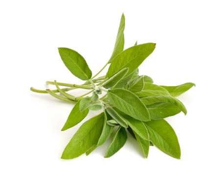 sage: Salvia officinalis (sage, also called garden sage, or common sage) Stock Photo