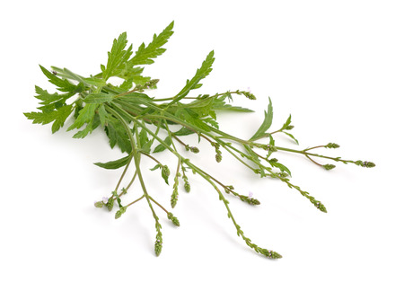 vegetables on white: Verbena officinalis, the common vervain or common verbena. Isolated.