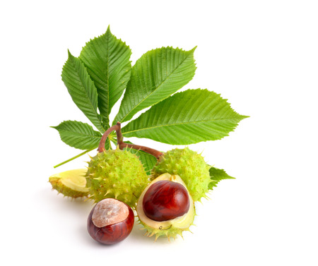 Horse-chestnut (Aesculus) fruits with leawes. Isolated on white background Foto de archivo