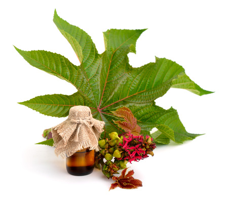 Ricinus communis, castorbean or castor-oil-plant. Composition with leaves andpharmaceutical bottle. Isolated on white background. Stock Photo