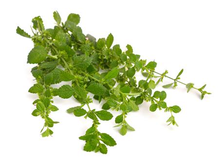 field mint: Melissa officinalis, known as lemon balm, balm, common balm, or balm mint Stock Photo