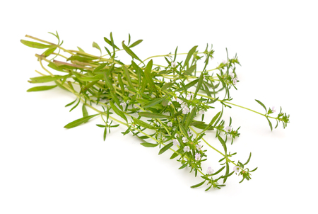 Summer savory isolated on the white background. Imagens