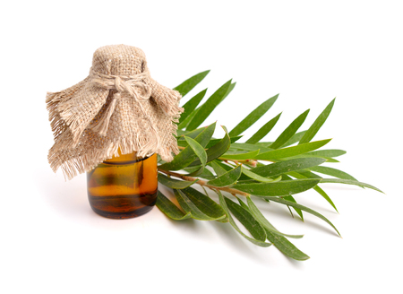 나뭇 가지 제약 병에 멜라루카 에센셜 오일. 흰색 배경에 고립.
