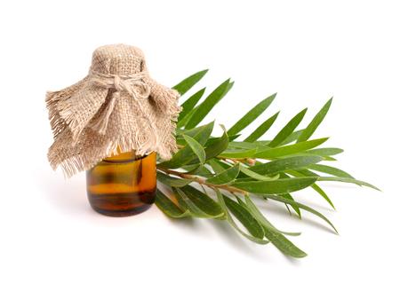 Melaleuca essentiële olie in de farmaceutische fles met takjes. Geïsoleerd op witte achtergrond.