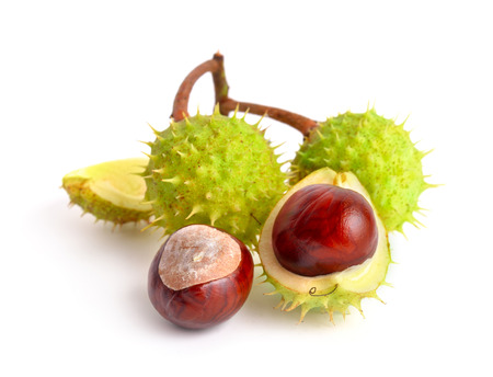 Horse-chestnut (Aesculus) fruits. Isolated on white background Imagens - 71832986