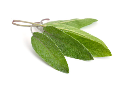 Salvia officinalis leaves (sage, also called garden sage, or common sage). Isolated on white background. Stock Photo