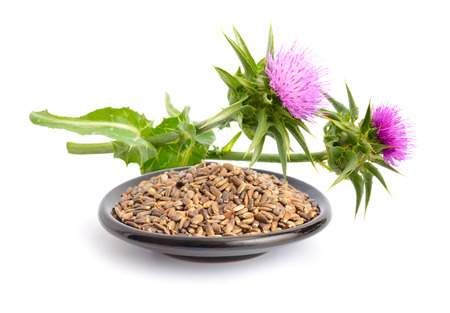 Milk thistle flowers with seeds. Isolated. Stockfoto