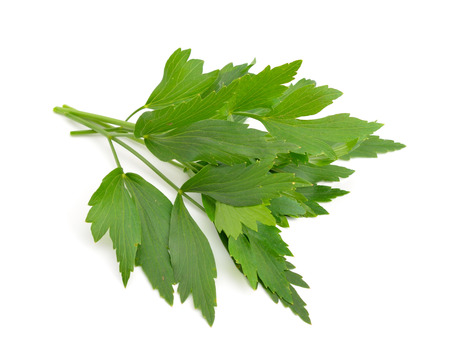 Lovage, Levisticum officinale. Isolated on white backgrounbd.
