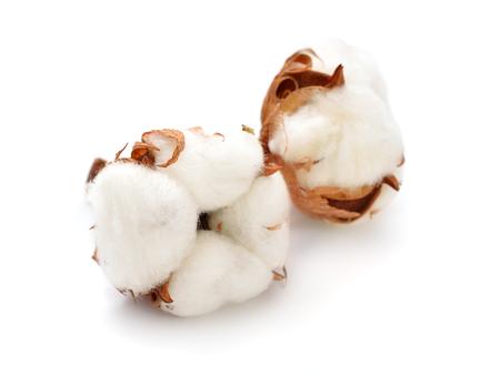 Cotton plant isolated on white background. Zdjęcie Seryjne - 71833048