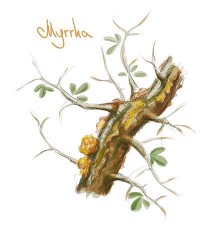 수지와 Commiphora myrrha 나무입니다. 수채화 모방입니다. 벡터 일러스트 레이 션.