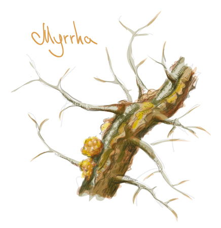 Commiphora myrrha tree with resin. Watercolor imitation. Vector illustration. Illustration