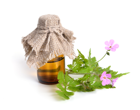 cranesbill: Geranium robertianum, Robertiella robertiana, commonly known as Herb-Robert, Red Robin, Death come quickly, Storksbill, Doves Foot, Crows Foot, or  Robert Geranium. Isolated. Stock Photo
