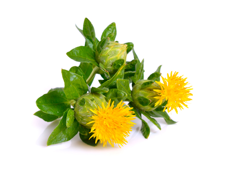 Safflower's flower. Isolated on white background.