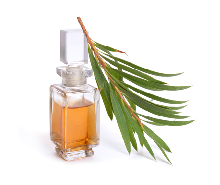 Melaleluca (tea tree) essential oil with twig. Isolated on white background. Banque d'images