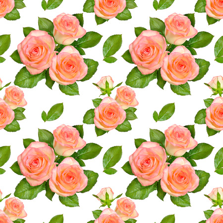 Seamless background with Pink roses. Isolated on white background.