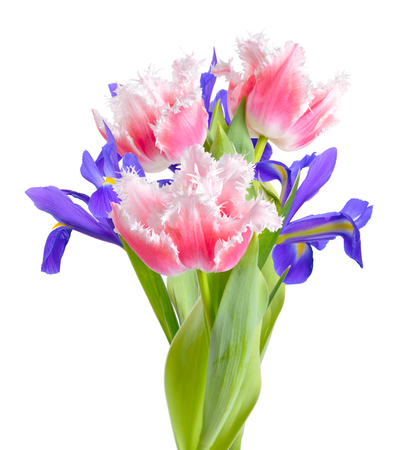 Pink tulips and irises isolated on white background.  Reklamní fotografie
