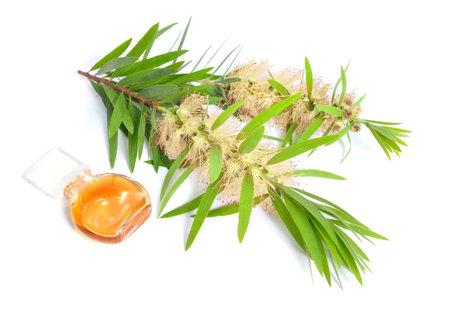 Melaleuca tea tree essential oil with twig. Isolated on white