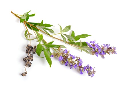 Vitex agnus-castus, also called vitex, chaste tree or chastetree, chasteberry, Abrahams balm, lilac chastetree or monks pepper isolated. Stock Photo