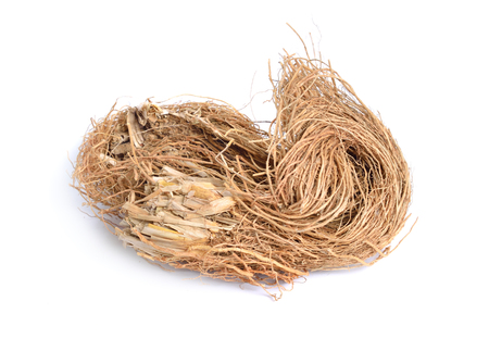 Roots of Chrysopogon zizanioides, commonly known as vetiver. Isolated on white background.