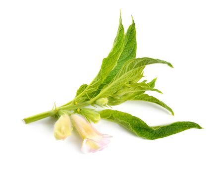 Sesame plant with flowers isolated on white background.