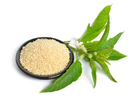 Sesame plant with flowers and seed isolated on white background.