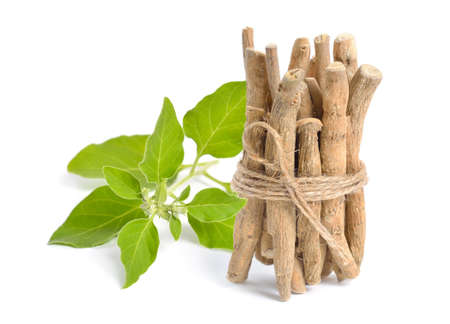 Root Withania somnifera, known commonly as ashwagandha, Indian ginseng, poison gooseberry or winter cherry.