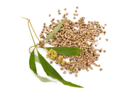 Vitex agnus-castus, also called vitex, chaste tree or chastetree, chasteberry, Abrahams balm Isolated Standard-Bild
