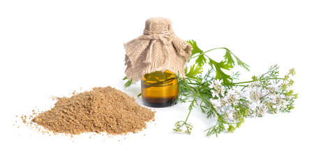 Coriander seeds powder. It is also known as Chinese parsley, dhania or cilantro. With flowering Plant Isolated. Standard-Bild