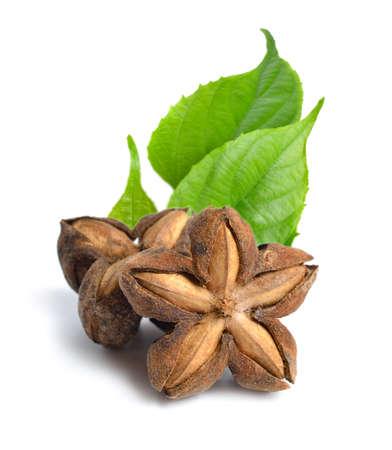 Plukenetia volubilis, commonly known as sacha inchi, sacha peanut, mountain peanut. Dried fruit isolated Standard-Bild